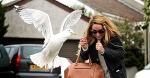 seagull-bird-attacks