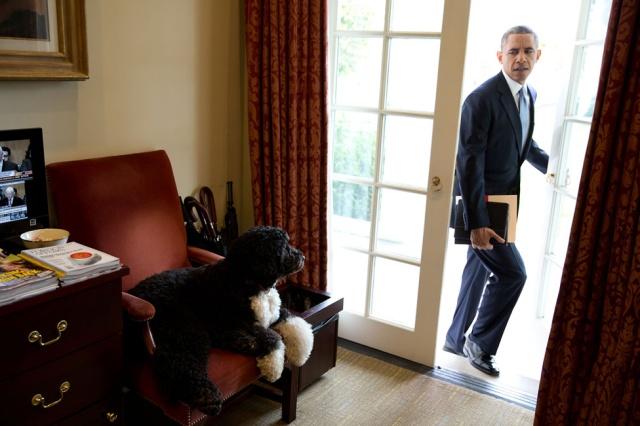 Bo on Chair